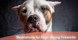 cation for dogs during fireworks