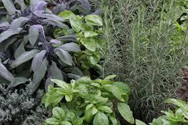how to grow a herb garden. Herbs: Growing How To Grow A Herb Garden G