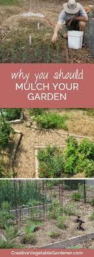 Organic Kitchen Gardening 17 Best Images About Organic Kitchen Gardening On Pinterest