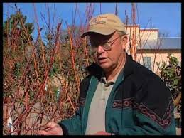 Pruning Fruit Trees With Garden Shears  Fruit Grower Works Pruning Fruit Trees Video