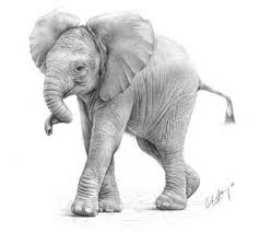 baby elephant drawings. Unique Elephant U0027Curlyu0027 Elephant Graphite Pencil Drawing By Giles Illsley Intended Baby Drawings I