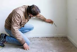 how to remove mold from walls healthy