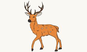 Deer Drawing Under Fontanacountryinn Com