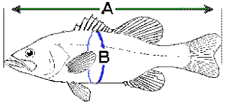Striped Bass Fishing Length To Weight Chart