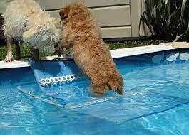 diy pool dog ramp dog pool dog pool