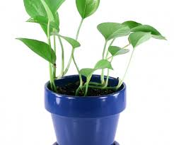 office pot plants. Medium-size Of Engaging Office Pot Plants Large House Or Do