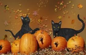 Image result for autumn pumpkins