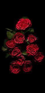 Red roses wallpaper ...