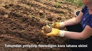 Şimdi ekim zamanı. Kara lahana ve 40 günlük fasulye nasıl ekilir? Tülinin  mutfağı Mart 2020 - YouTube