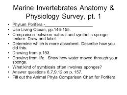 Animal Phyla Comparison Chart Marine Invertebrates Anatomy Physiology Survey Pt Ppt