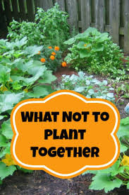 how to plant a garden. Amazing Can You Plant Garlic In The Spring Has Ddaefaedbffcb Tomato Plants Cilantro How To A Garden