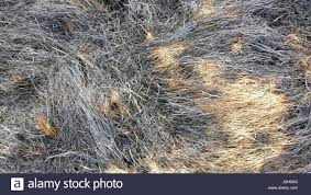dry grass field background. Burned Dry Grass Field Background T