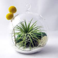 home decoration attractive hanging air plant terrarium in sphere shape by sea and asters