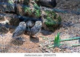Bird Minerva High Res Stock Images | Shutterstock