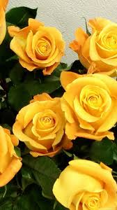 Yellow Flower iPhone Wallpapers on ...