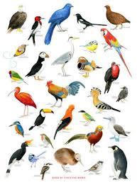 Bird Beak Chart Multicolor Topsun Birds Chart Topsun Enterprises Id