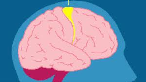 the motor and somatosensory cortex