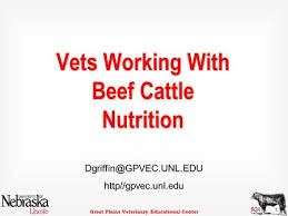 great plains veterinary educational center 1 vets working with beef cattle nutrition gpvec unl edu ppt