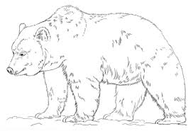 Small Picture Grizzly Bear coloring page Free Printable Coloring Pages