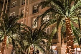 amazing palm trees at the winter garden restaurant london