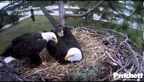 pritchett eagle cam. Modren Eagle YouTube Premium Inside Pritchett Eagle Cam