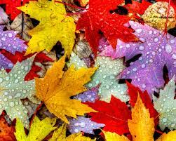 1280x1024 Nature Autumn Leaves ...