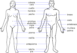 Human Body Parts Chart In English Body Parts Chart Clip Art Library