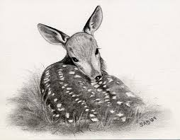 Huge Collection Of Baby Deer Drawing Download More Than 40 Images