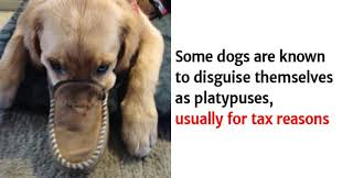 Hilarious Dog Facts You Certainly Didn't Know New Hilarious