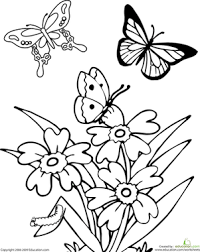 Butterfly coloring page coloring page for kids and adults from insects coloring pages, butterfly coloring pages. Butterfly Worksheet Education Com