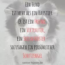 Seniorhunde Browse Images About Seniorhunde At Instagram Imgrum