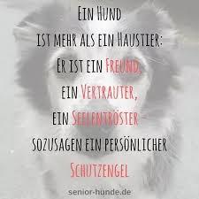 Seniorhunde Browse Images About Seniorhunde At Instagram Imgrum