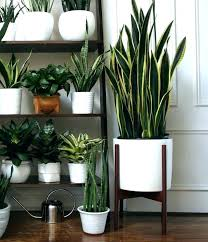 indoor ceramic plant pots extra
