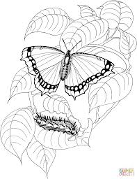 Small Picture Caterpillar and Butterfly 4 coloring page Free Printable