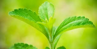 inPharma - Stevija – najpopularniji prirodni zaslađivač