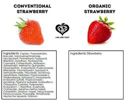 best natural vs un natural food images natural a conventional strawberry vs an organic strawberry