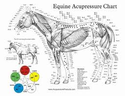 Acupuncture Point Chart Free