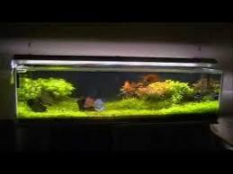 aquarium garden. Wonderful Aquarium Aquarium  In Garden I