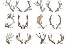 20 You Will Love Antler Chart