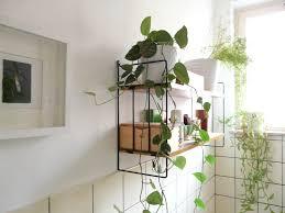 Decorative Bathroom Shelving Best Plants That Suit Your Bathroom Fresh Decor Ideas Suits