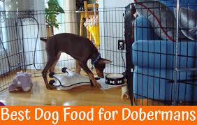 A Guide On Best Dog Food For Dobermans In 2019 Us Bones