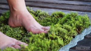 Moss Mats Moss Carpet By Nguyen La Chanh Carpet Vidalondon