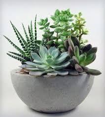 succulent, how to make succulent terrarium, diy, tutorial, flower  arrangement | Planters | Pinterest | Terrarium diy, Terraria and Flower  arrangements