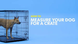 Kong Crate Size Chart Howto_findtherightsizecrateforyourdog_r0