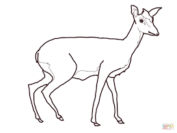 Small Picture Dik Dik coloring page Free Printable Coloring Pages