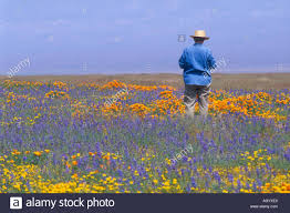 older woman stands in colorful wildflowers carrizo plain national monument san luis obispo county california