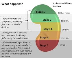 Stages Of Kidney Failure Kidney Disease Stages Kidney