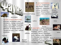 Рефераты по географии Реферат по географии на тему россия 8 класс