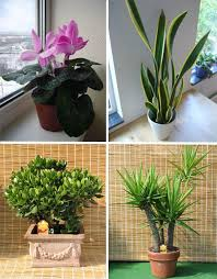 Unusual Urban Planting: 5 Different Types of Gardening