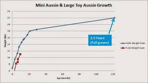 Anatolian Shepherd Puppy Growth Chart Australian Shepherd Puppy Growth Chart Goldenacresdogs Com